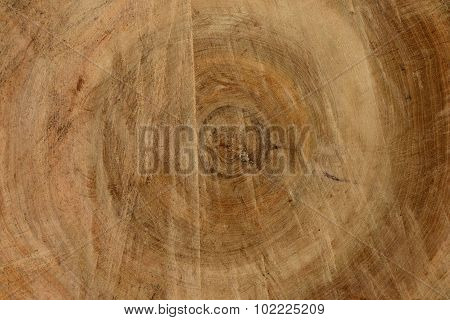 The Old Linden Tree Wood Texture Background