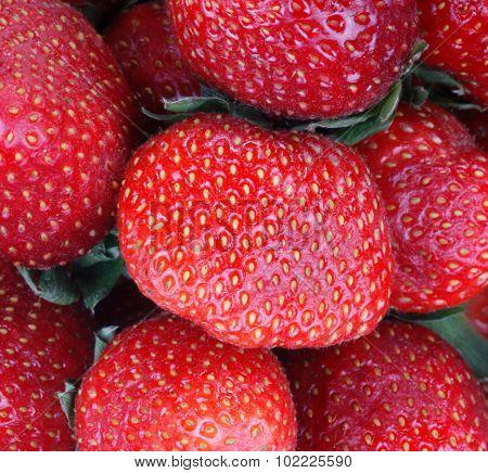 Many Strawberry