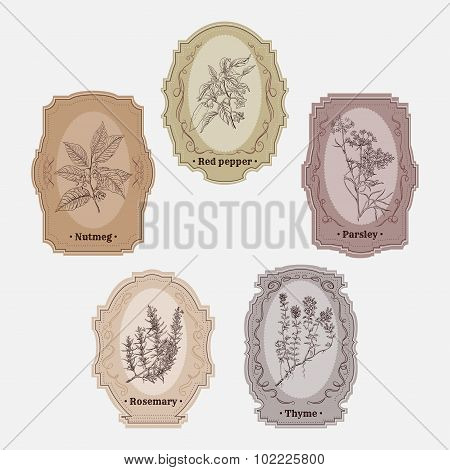 Collection of vintage storage labels with herbs and spices. red pepper, parsley, thyme, rosemary, nu