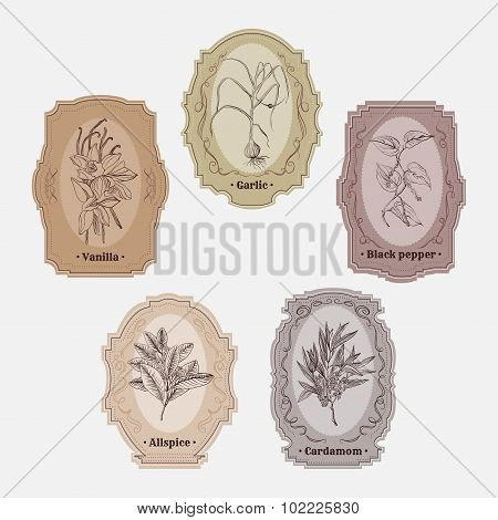 Collection of vintage storage labels with herbs and spices. garlic, black pepper, cardamom, allspice