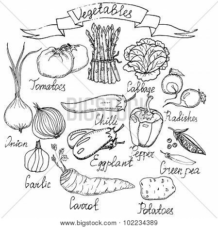 Hand drawn vector vegetables.