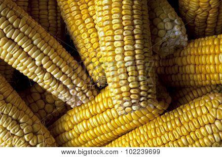 Corn Cobs.