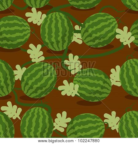 Water-melon Plantation Seamless Pattern. Fruity Vector Background. Texture Plants On Bed. Plot Sowed