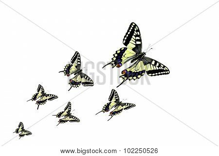 butterflies in different flying positions
