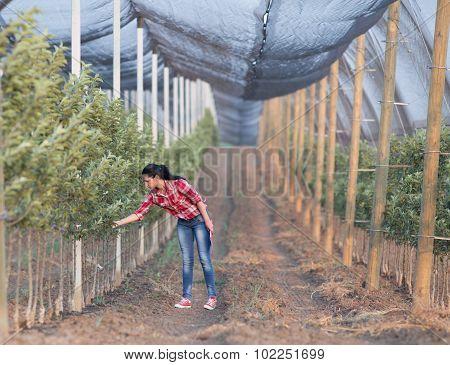 Farmer Woman In Orchard