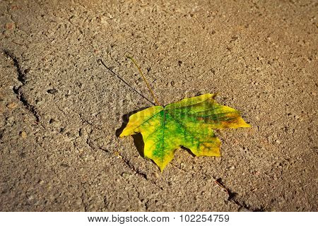 Single Maple Autumn Leaf