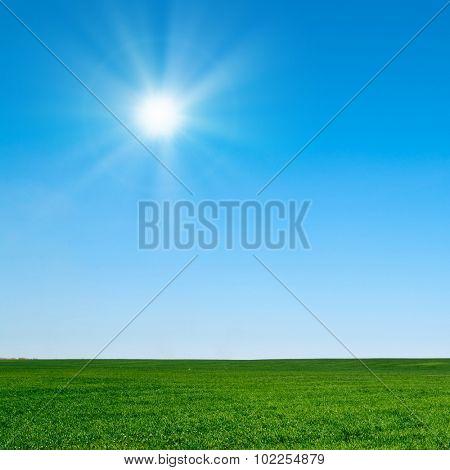 beautiful landscape, green grass, blue sky