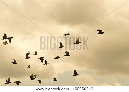Pigeons were flying in the evening sky.