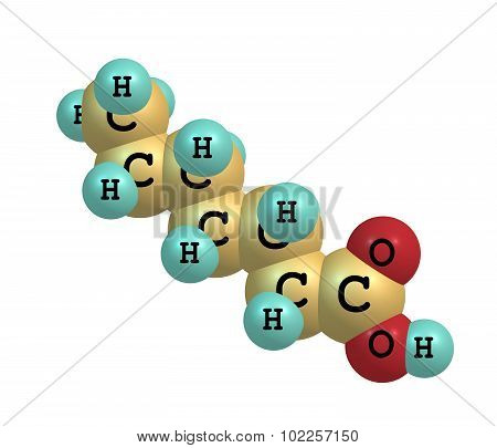 Heptanoic - enanthic - acid is an organic compound composed of a seven-carbon chain terminating in a carboxylic acid. It is an oily liquid with an unpleasant rancid odor. 3d illustration