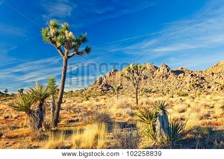 Joshua Tree National Park in Mojave Desert, California