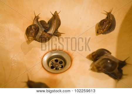 branch of snails in rusty sink close up