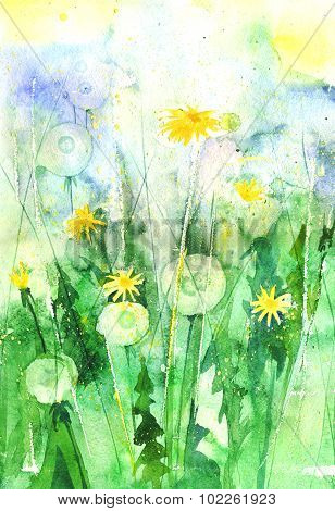 Watercolor Dandelions In The Garden