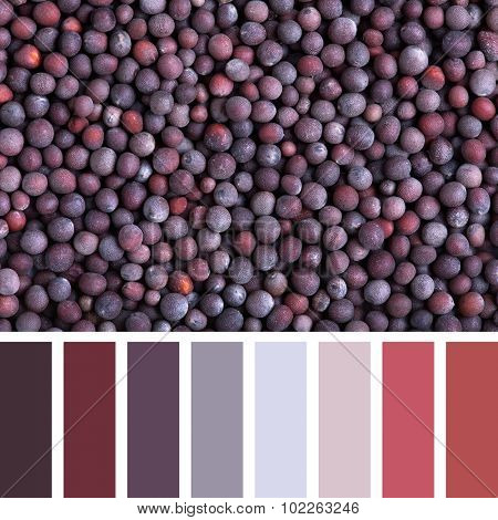 A background of black mustard seeds in a colour palette with complimentary colour swatches.