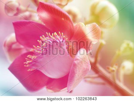 Sal Of India Flower Background Lighting?