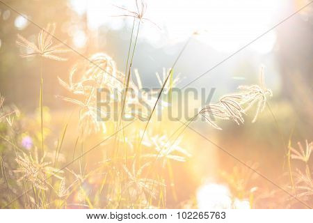 Grass In The Moring