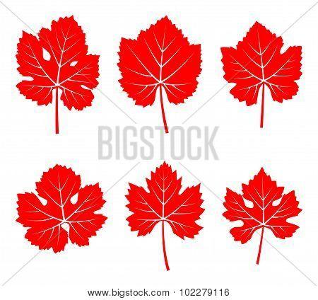 Autumn Grapevine Leaves