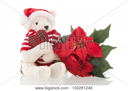 Handmade stuffed Christmas bear with Poinsettia isolated over white background