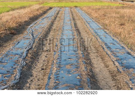 Field Ready To Plant