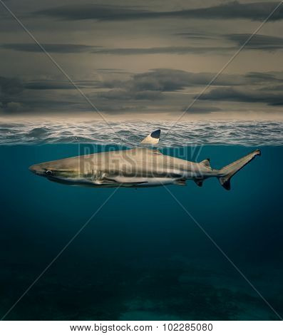 shark with fin above water