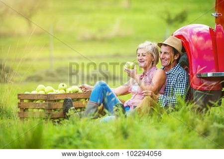 Couple harvesting apples