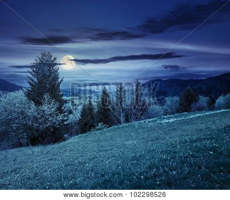 Meadow With Dandelions Near Forest On Hillside At Night