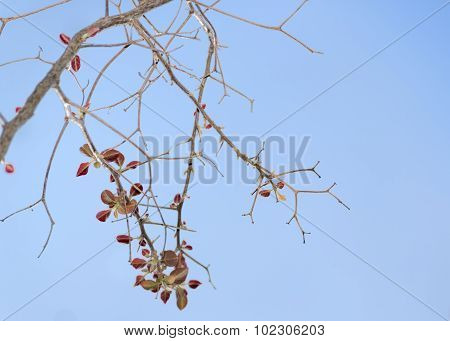 Ocher Leaves And Branches Against Blue Sky