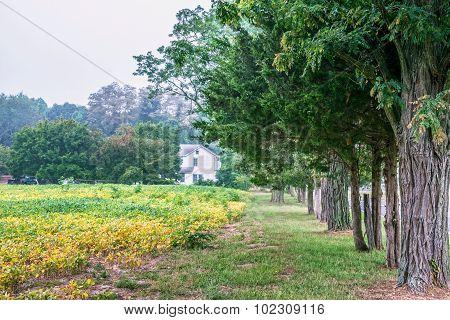 Tree Lined Field