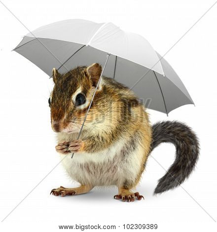Funny Squirrel  Under Umbrella On White, Weather Creative Concept