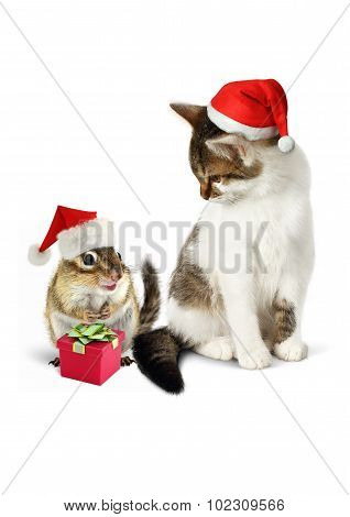 Comic Xmas Pet, Funny Chipmunk And Cat With Santa Hat