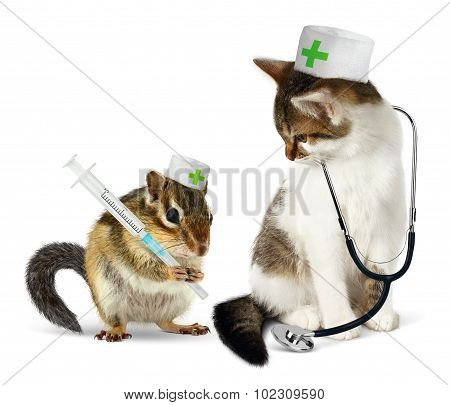 Veterinary Concept, Funny Chipmunk  And Cat With Phonendoscope And Syringe