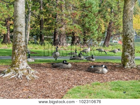 Gesse At Coulon Park 2