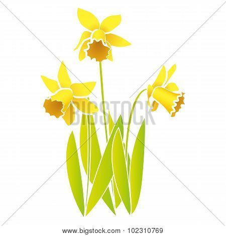 Vector Daffodils