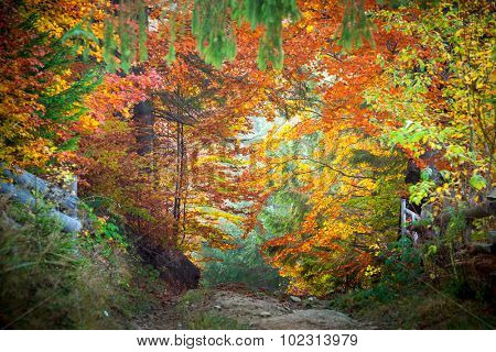 Amazing vibrant Autumn Fall Leaves colors in forest landscape and footpath to silence