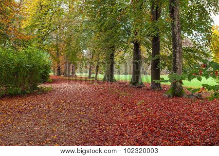 Trail covered with fallen red leaves and trees with green foliage in autumnal park of racconigi in Piedmont, Northern Italy.