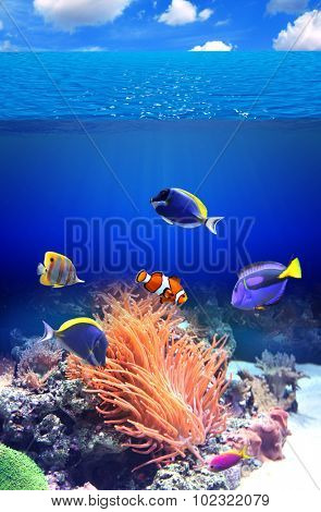 Underwater scene with anemone and tropical fish