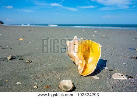Sea Shell On A Beach Of Atlantic Ocean At Sunset