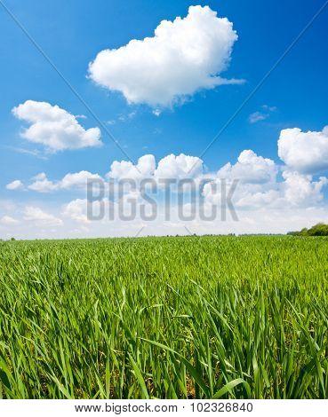 Green meadow under nice clouds in sky