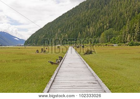 Boardwalk Through A Coastal Estuary
