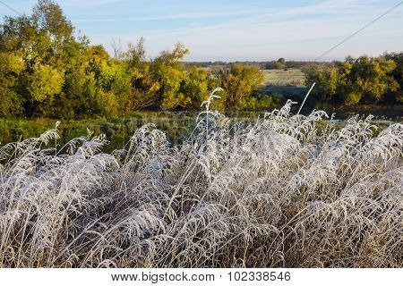 The first frost. Autumn landscape with hoarfrost