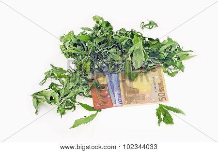 Dried Hemp Leaves On Euro Banknotes