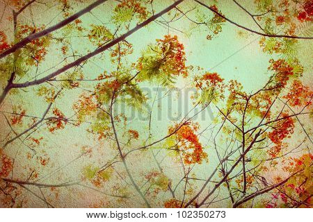 Abstract Retro Background From Flam-boyant Or Peacock Flowers Filtered By Grunge Texture