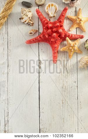 seashell  on wooden background texture