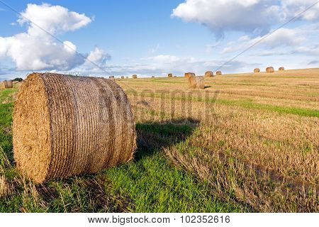 Round Straw Bales On A Mown Field Under A Blue Sky With White Clouds