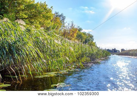 Landscape Image Of A Small River Reedy And Old Trees