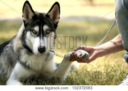 Young man with beautiful huskies dog in park