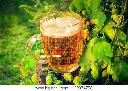 Pint Golden Beer Wooden Trunk
