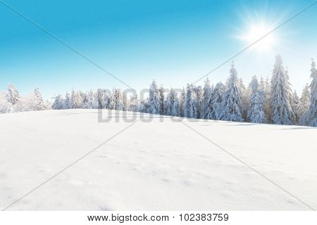 Winter snowy forest with meadow and blue sky