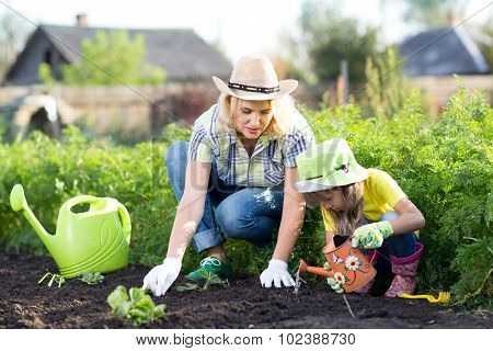 Mother and daughter planting strawberry plants in the garden