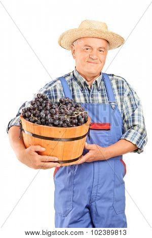 Mature farmer in blue overalls holding a bucket full of grapes isolated on white background