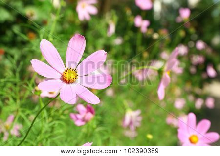 Fresh flowers over green grass background